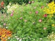 shropshire garden planting