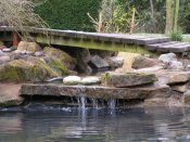 shropshire ponds and water features