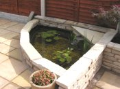 water features fish pond fish